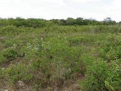 Residential/Commercial lot with Sea Views - Mangrove Bush, Long Island, Bahamas